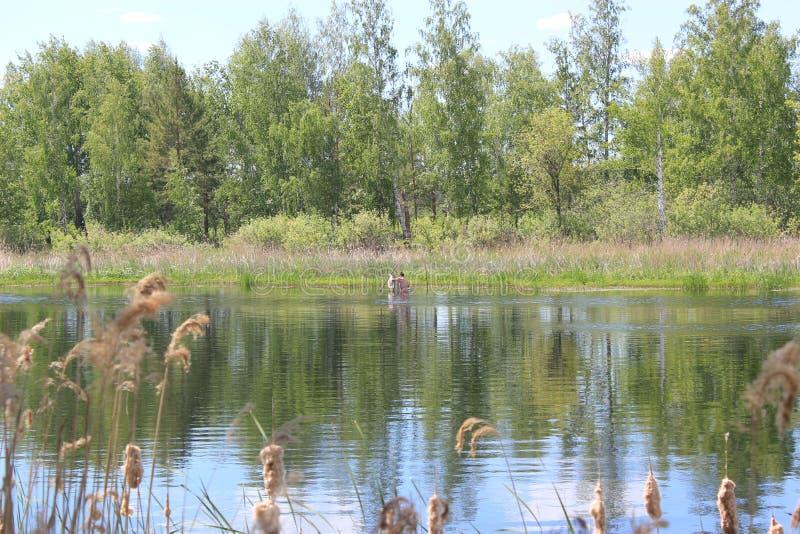 ?? 湖在森林里 免版税库存照片
