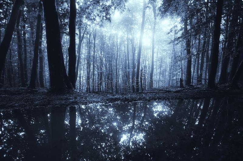 湖在黑暗的森林里在与月光的晚上 库存图片