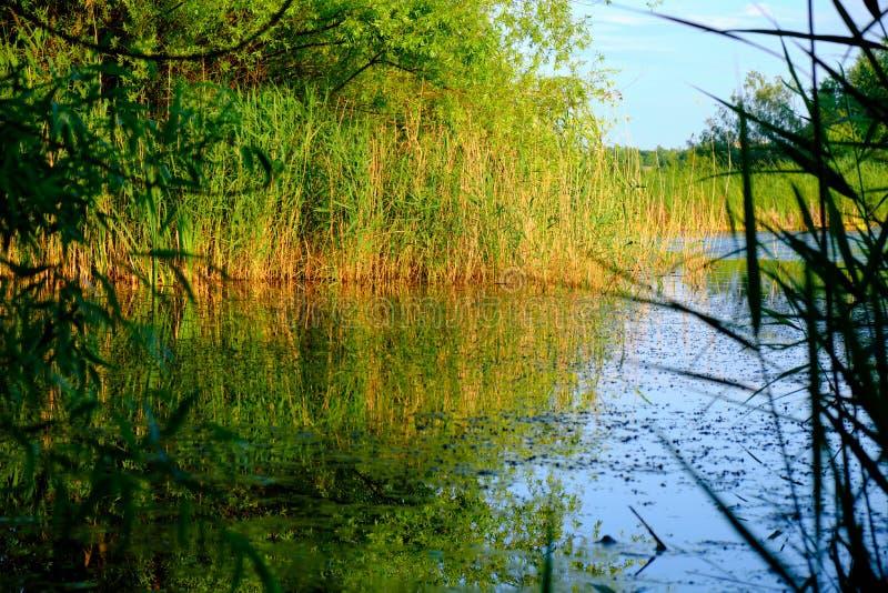 湖场面在Vacaresti自然公园Parcul自然Vacaresti在布加勒斯特,罗马尼亚,在晚上 免版税库存照片
