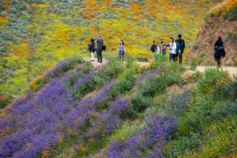 湖埃尔西诺,加利福尼亚- 2019年3月20日:游人拍照片并且走足迹在步行者峡谷,敬佩野花和 免版税库存图片