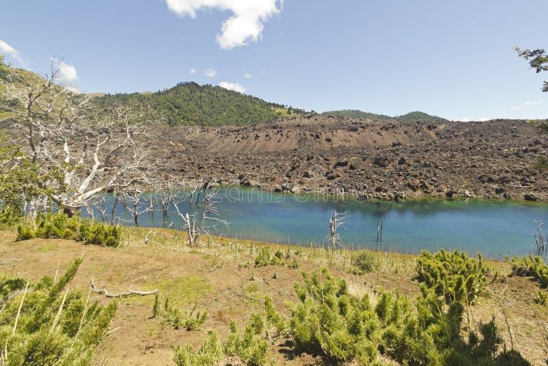 湖埃斯科里亚尔修道院和化石森林,智利 库存图片