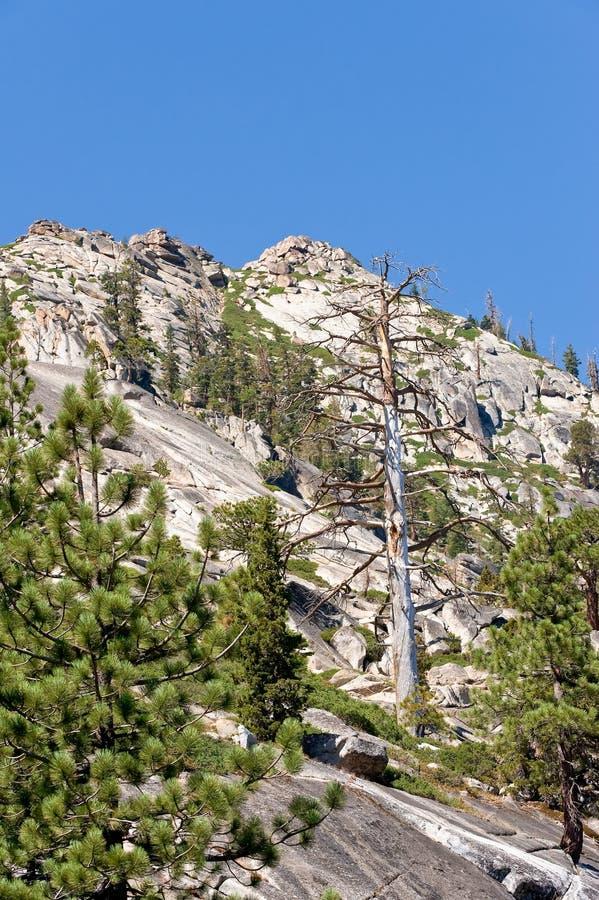 湖山风景tahoe 图库摄影