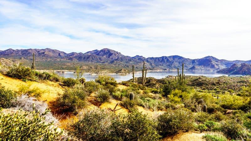 湖山围拢的巴特利特和许多柱仙人掌和其他仙人掌在亚利桑那的沙漠风景 免版税库存照片