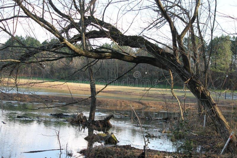 湖岸在湖尾随公园晴天 库存照片