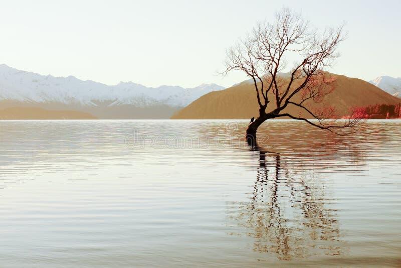 湖新的wanaka西兰 免版税图库摄影