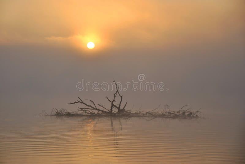 湖有薄雾的日出 免版税库存照片