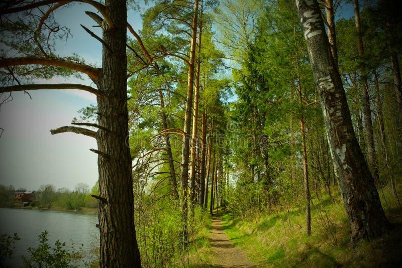 湖森林 免版税库存图片
