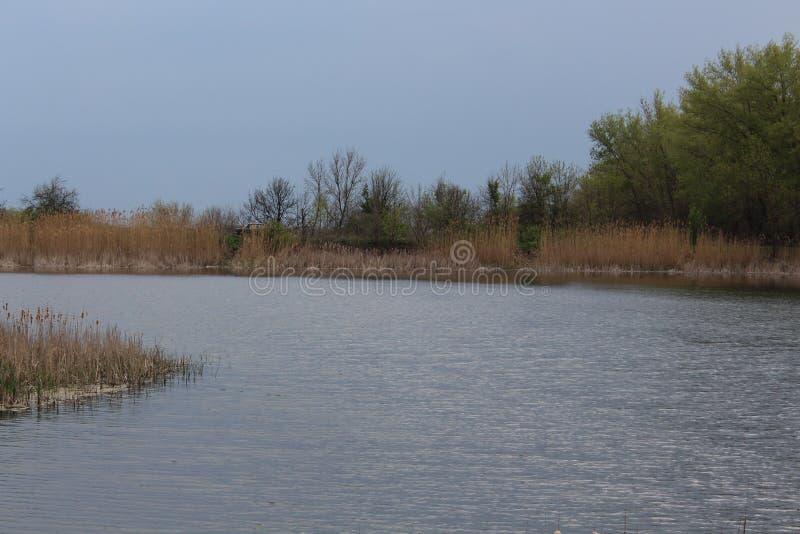 湖池塘水树春天用茅草盖蓝色夏天皱纹在天空的风 库存图片