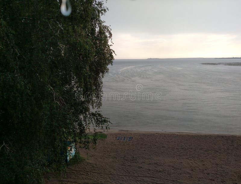 湖海滩在与忘记了天际桦树看法与叶子宏观下落的在看法的地毯的一个雨天 免版税库存图片