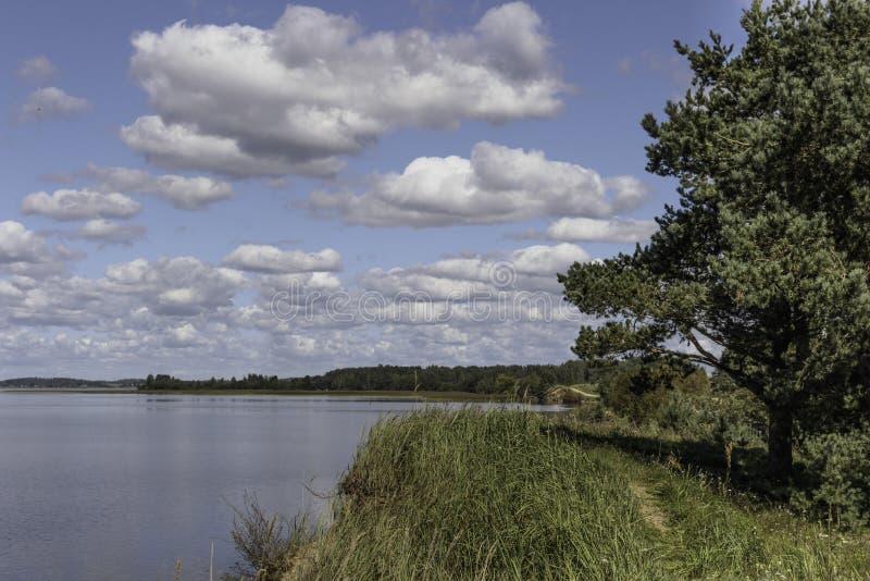 湖的岸在夏天 免版税图库摄影