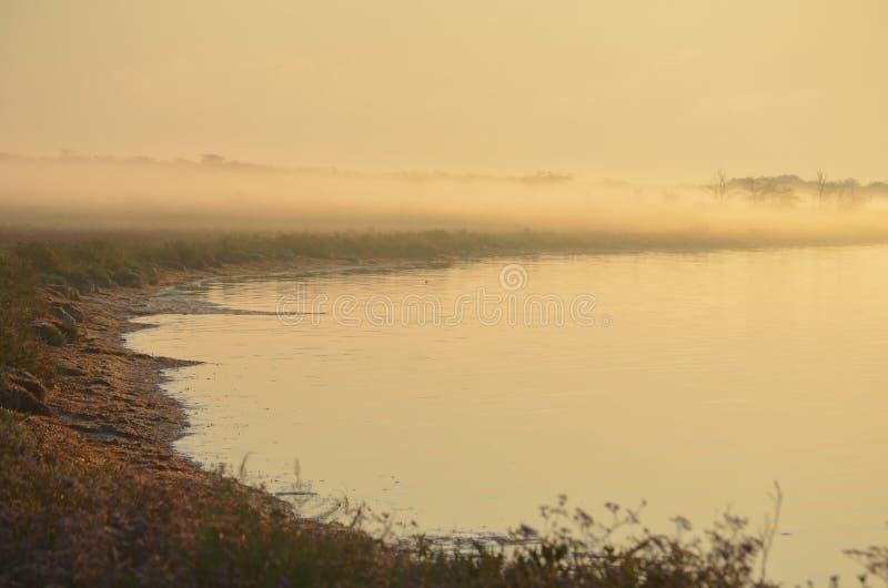 湖的岸浓雾的 精美桃红色背景 免版税库存照片