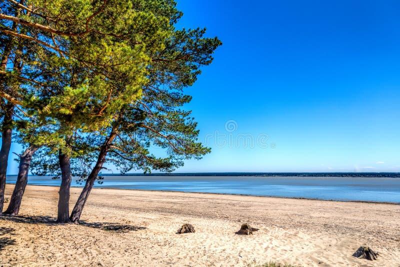 湖的岸的绿色森林,在岸的沙子 免版税库存图片