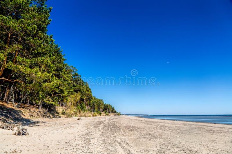 湖的岸的绿色森林,在岸的沙子 免版税库存照片