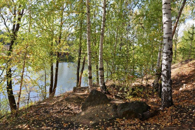 湖的桦树树丛 库存照片