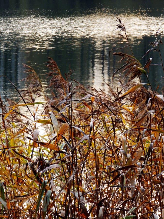 湖的秋天视图, 免版税库存照片