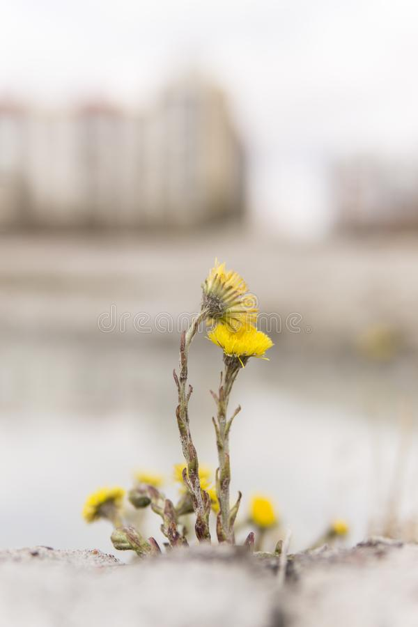 湖的野生植物 免版税图库摄影