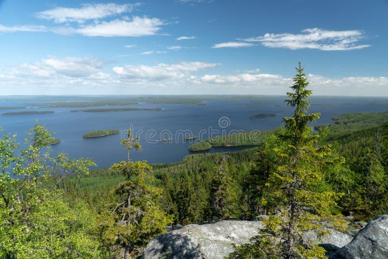 湖皮耶利宁湖在Koli国家公园在芬兰 免版税库存图片