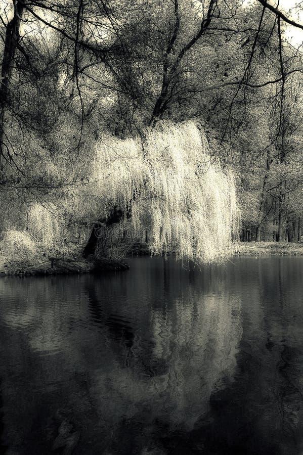湖神秘主义者 库存图片