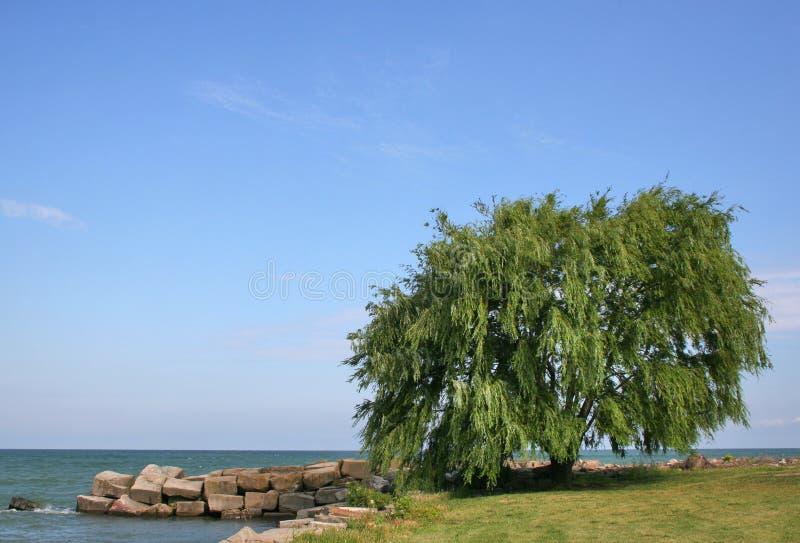 湖结构树杨柳 库存图片