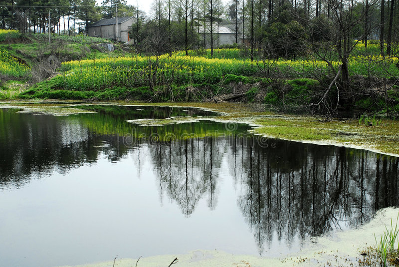 湖结构树 库存照片