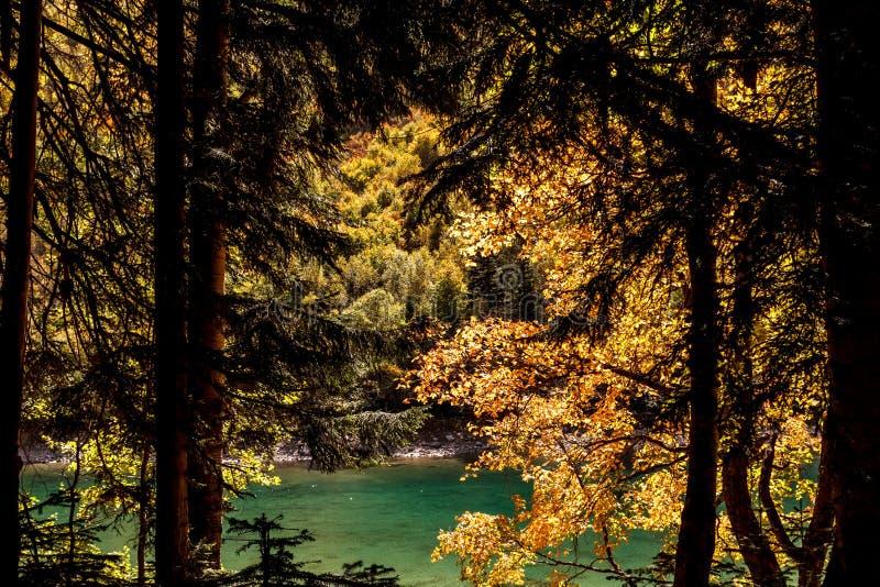 湖视图通过秋天红色绿色森林 免版税库存图片