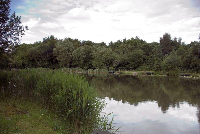 湖视图 库存照片