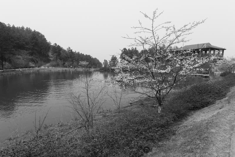 湖边平地佐仓黑白图象 图库摄影