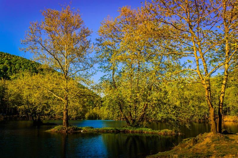 湖边森林 库存图片