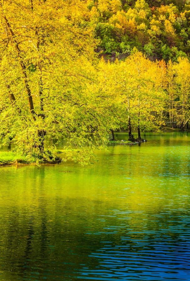 湖边森林 免版税库存照片