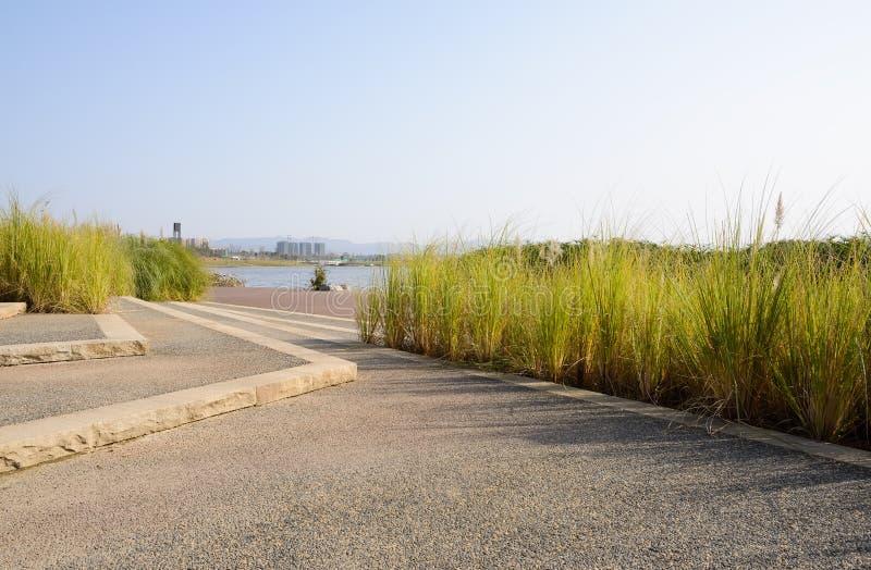 湖边楼梯和草在晴朗的冬天下午 图库摄影