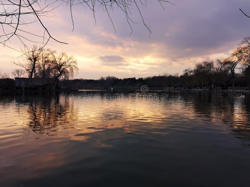 湖边的橘黄日落树影 库存图片