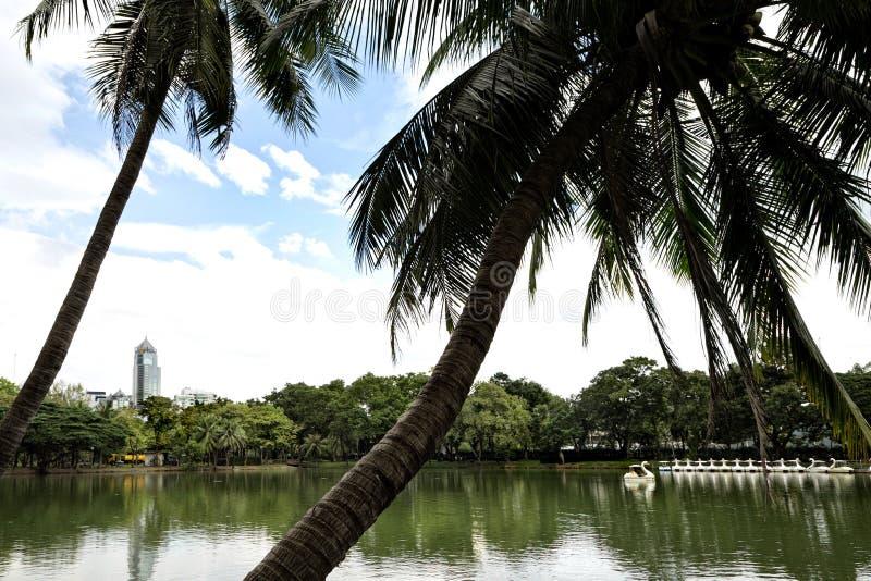 湖边视图风景与棕榈树的在B的Lumphini公园 免版税库存图片