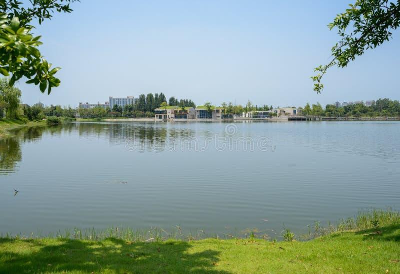 湖边象草的草坪在晴朗的夏天城市 免版税库存图片