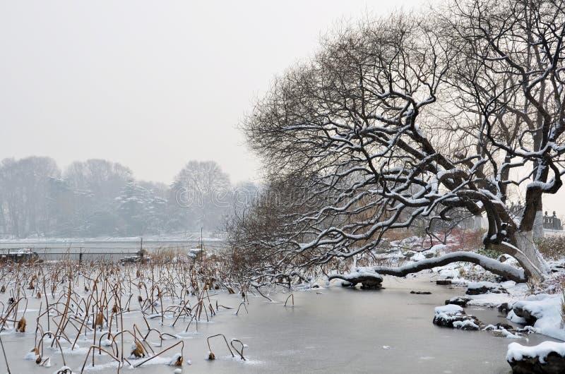 湖附近的雪结构树 免版税库存图片