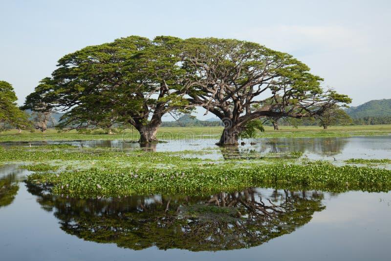 湖风景-与水反射的硕大树 免版税库存图片
