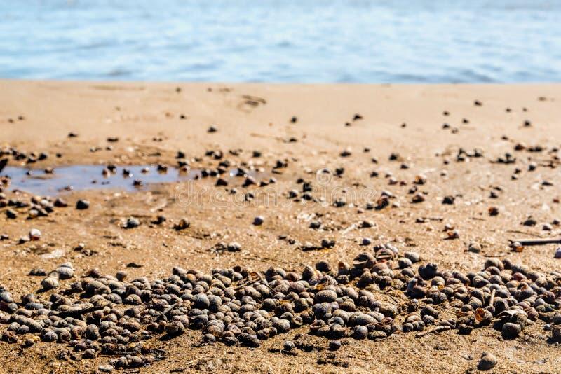 湖,夏天,海滩的岸 免版税库存图片