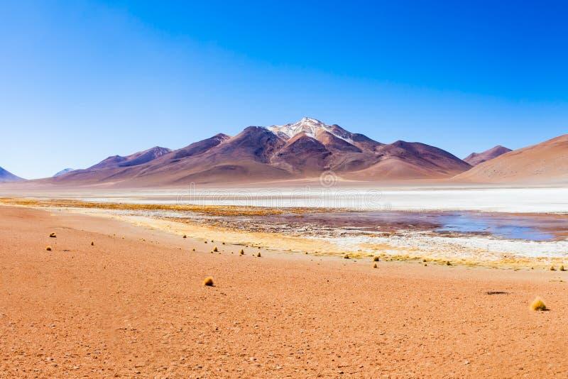 湖,玻利维亚Altiplano 免版税图库摄影