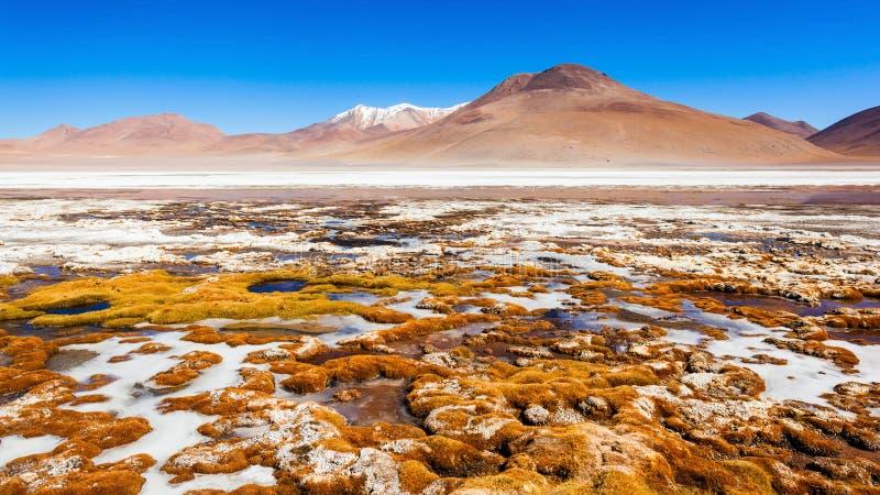 湖,玻利维亚Altiplano 库存图片