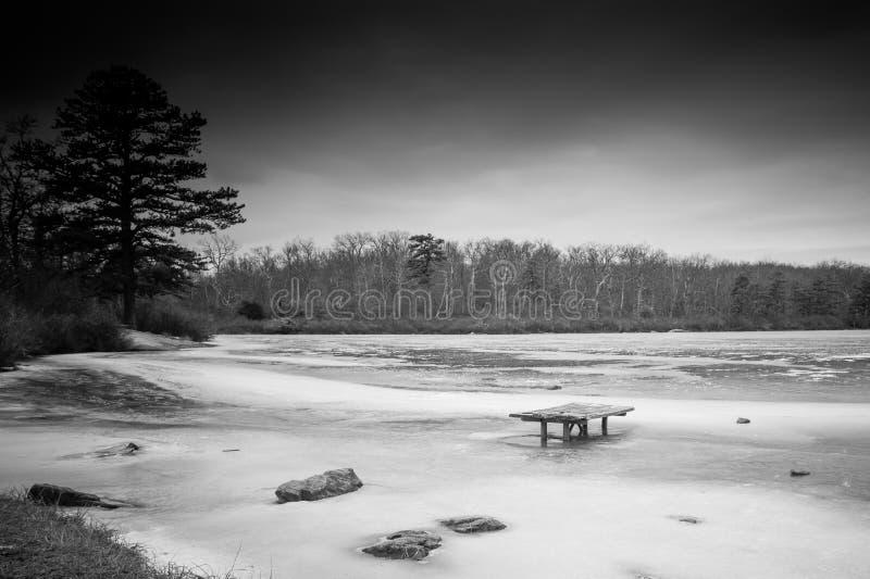 冻湖黑白冬天场面有突出的常青树的在背景中 免版税库存照片
