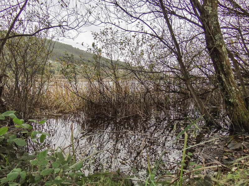 湖Doniños岸  库存照片