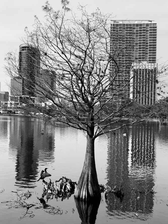湖Eola 图库摄影