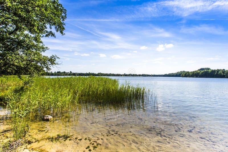 湖Hancza 最深的湖在中欧和东欧 波兰 图库摄影