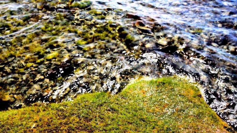 湖Hubsugul岸的边缘  向量例证