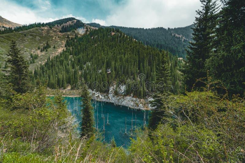 湖Kaindy凹下去的森林  湖Kaindy,意味`桦树湖`是一个400米长的湖在哈萨克斯坦那 库存图片