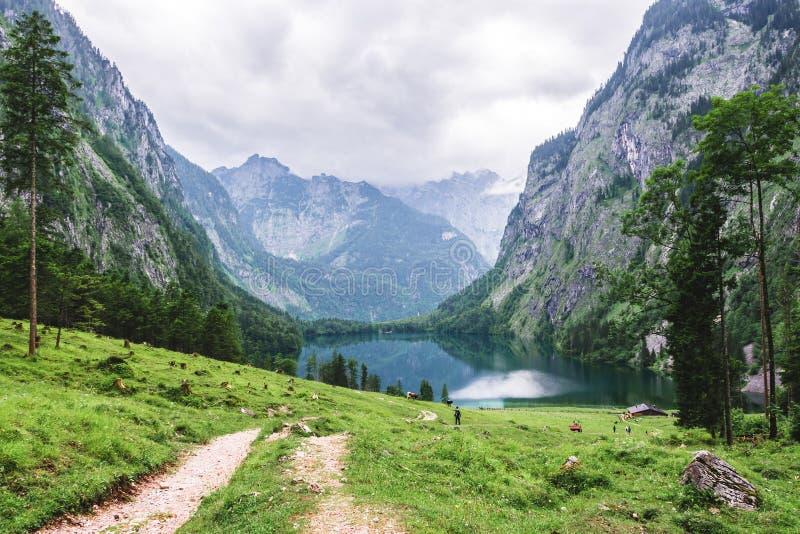 湖Obersee, Sch nau上午Konigssee,巴伐利亚,德国 与母牛的伟大的高山风景在国家公园贝希特斯加登 库存图片