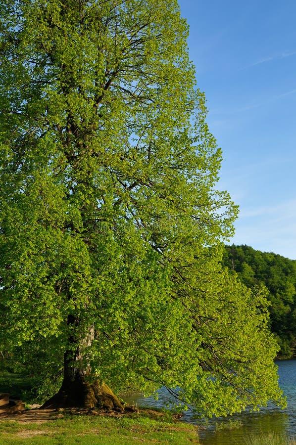 湖plitvice 免版税库存照片