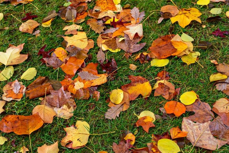 湿和五颜六色的秋叶 库存照片