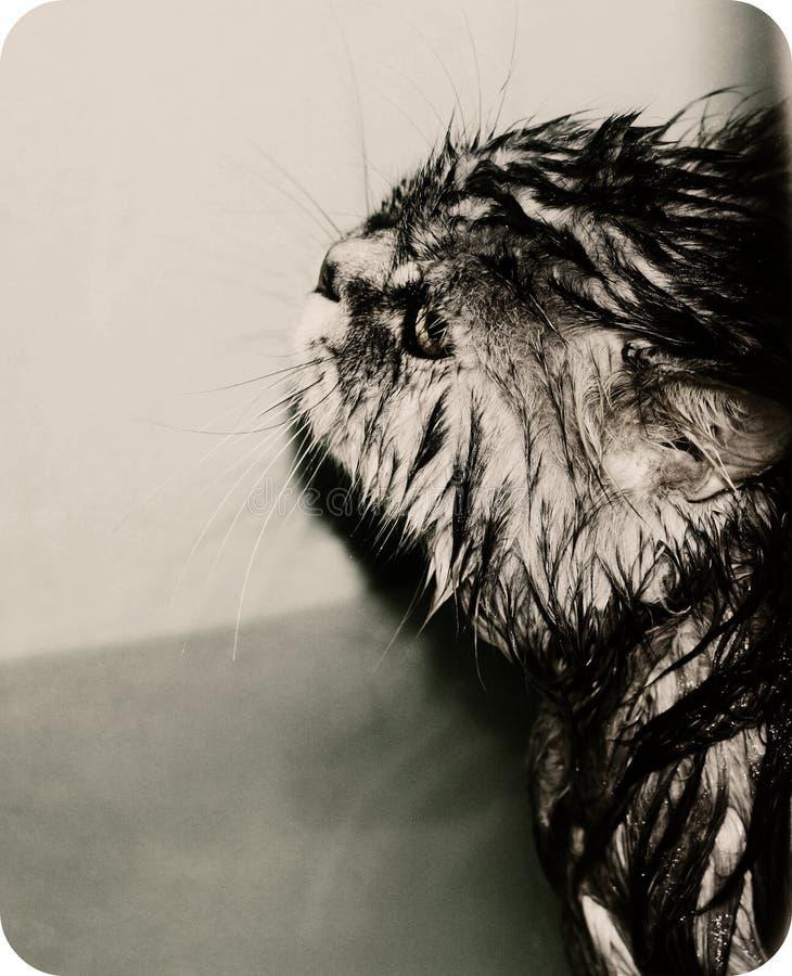 湿哀伤的猫 库存图片