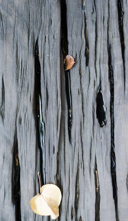 湿木桌板条有干叶子背景 库存图片