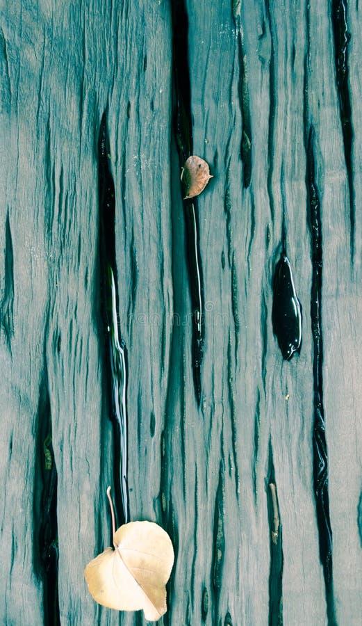 湿木桌板条有干叶子背景 库存照片